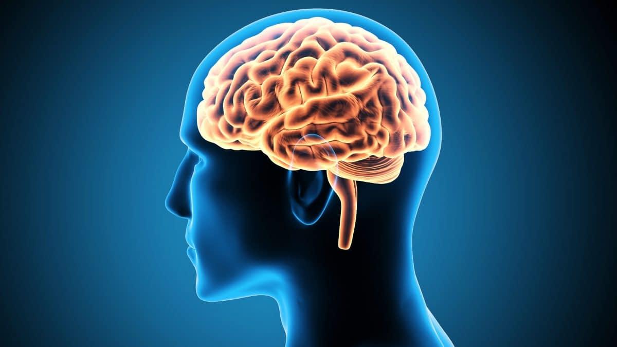 cerebro Onze Mentiras Que Você Acreditou a Vida Toda