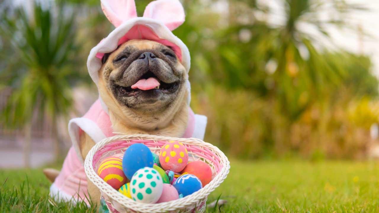 Ovos de Páscoa especiais sabor carne para cães e peixe para gatos