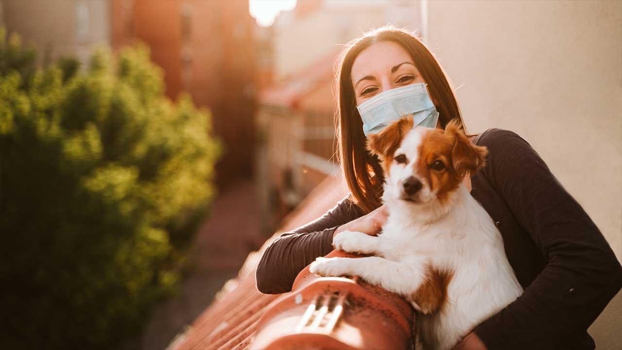 7 cuidados com os pets para prevenir a Covid-19