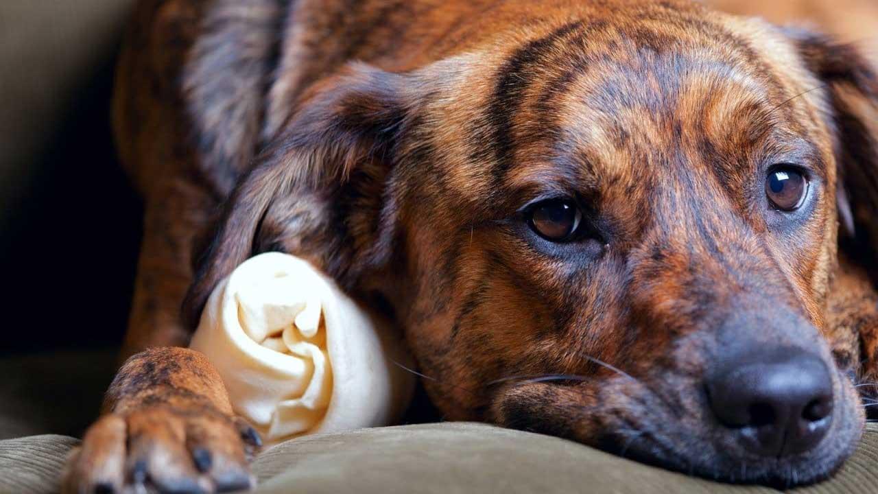 Na era da depressão, os pets também estão sofrendo