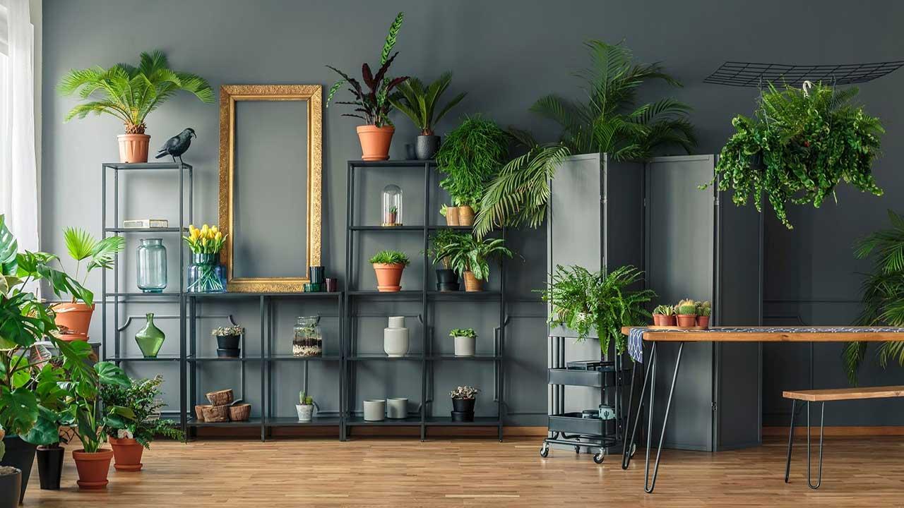 Dê uma cara nova a ambientes internos usando plantas na decoração