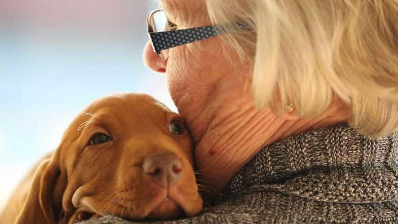 Os benefícios de animais de estimação aos idosos reclusos