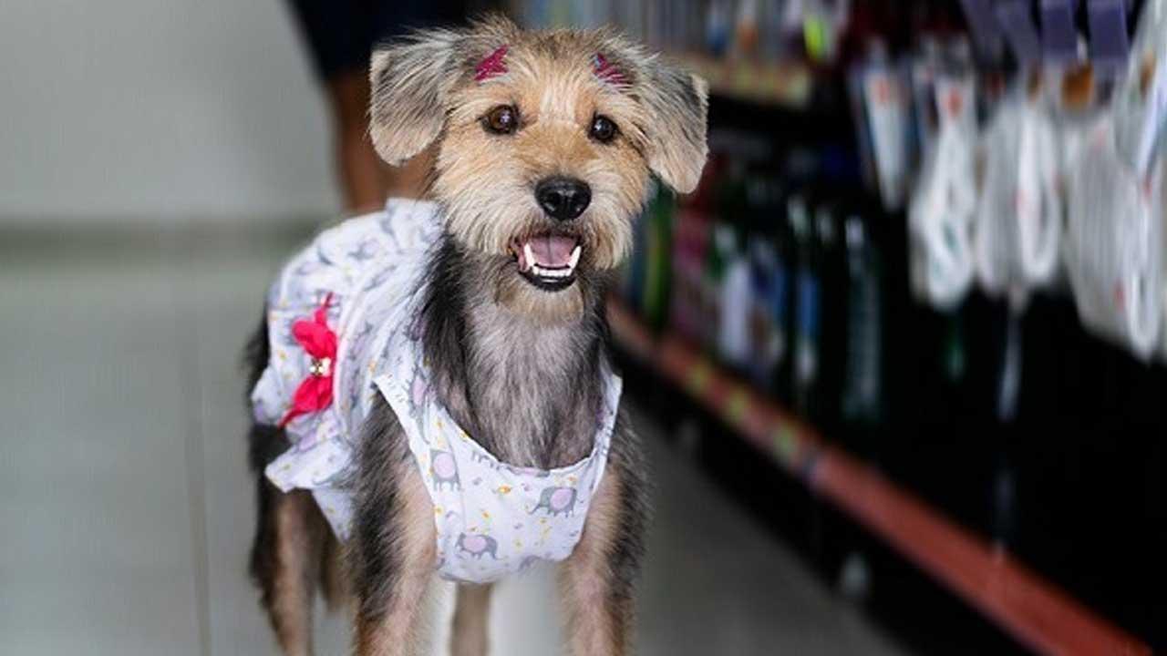 Cachorros de abrigo ganham ensaio fotográfico e day spa para incentivar adoção responsável