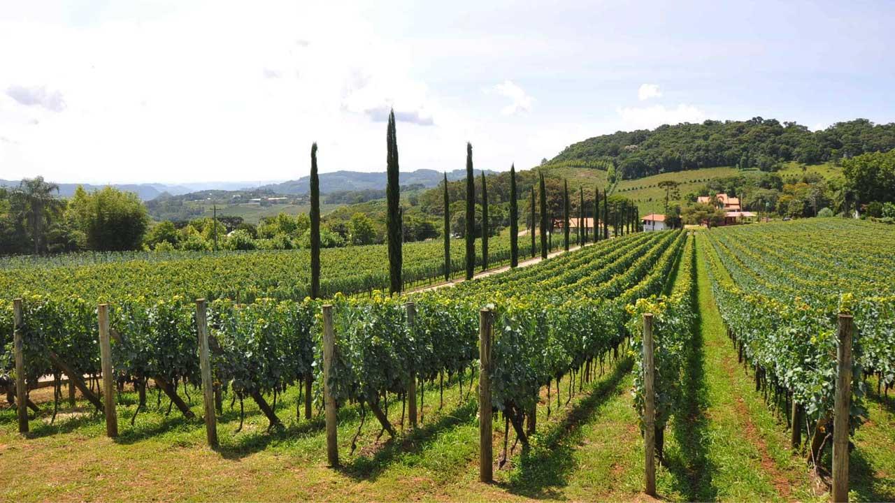Circuito do Vinho: Roteiro experiências inéditas e exclusivas em 14 vinícolas no Sul!