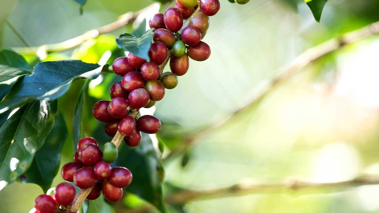 Você conhece tudo sobre café?