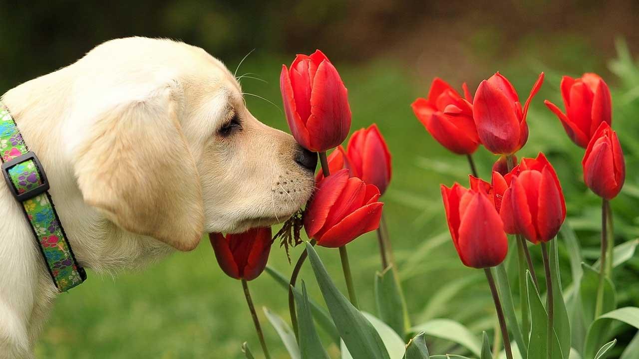 Flores são nocivas para os pets? 7 dicas para preservar a saúde e o bem-estar dos animais de estimação