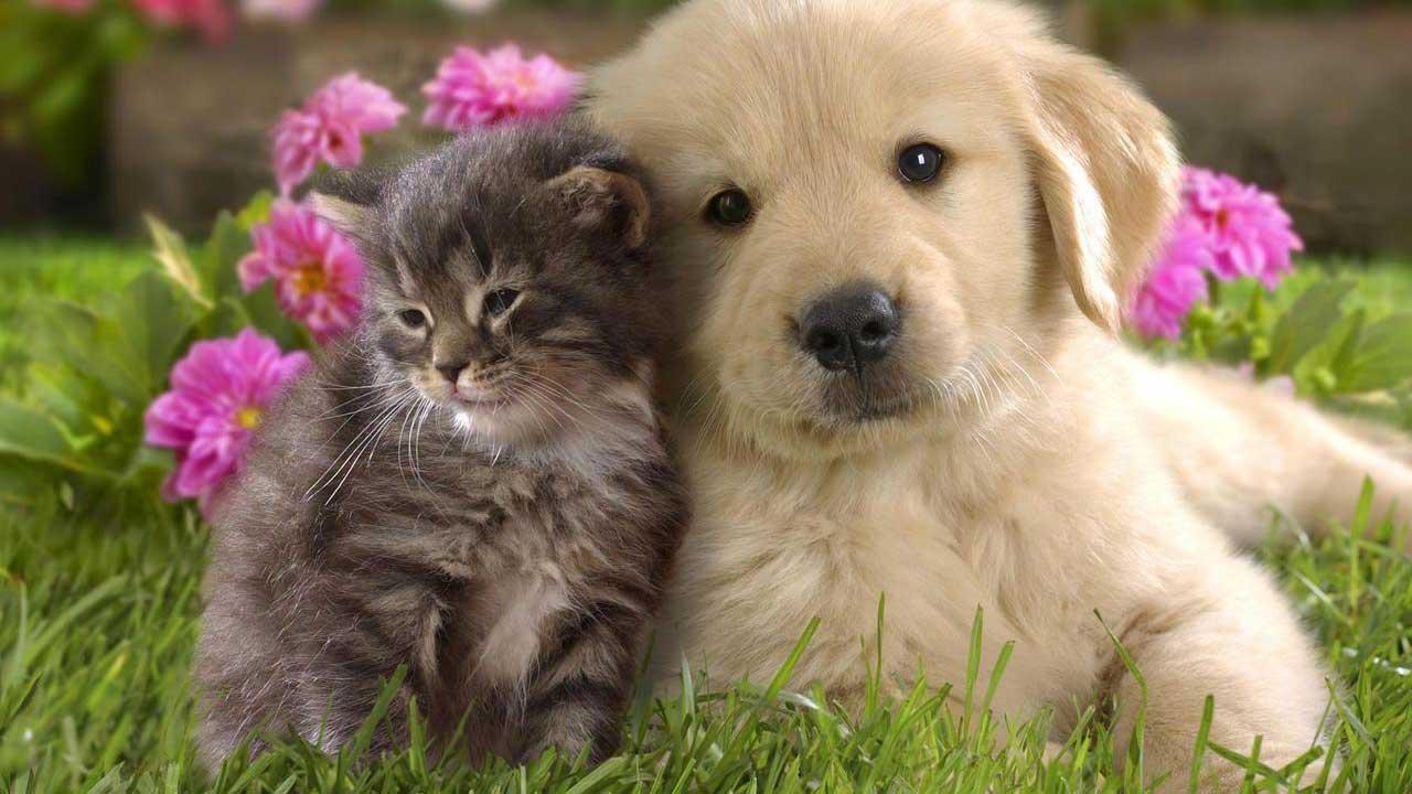 A primavera chegou e pede cuidados específicos com os pets: descubra quais