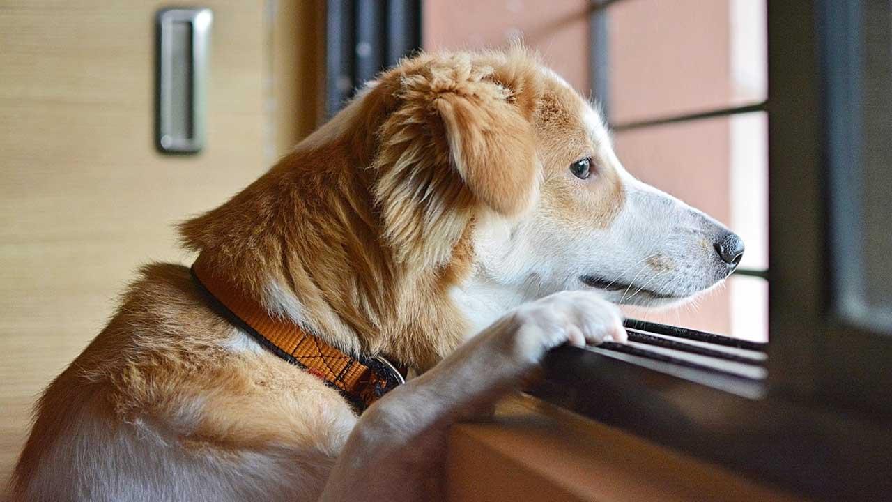 Fim do home office: seu pet pode sofrer com o retorno à rotina fora de casa